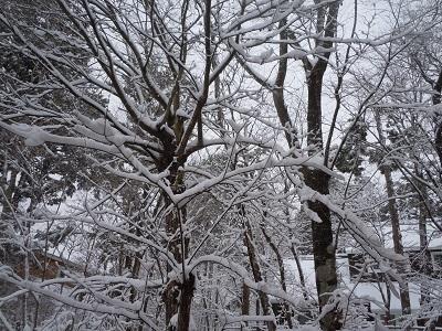 4月1日 雪1.jpg
