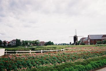 お花畑と風車 .JPG