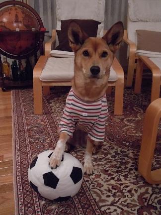 サッカー犬.jpg