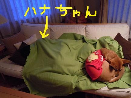 ハナちゃんとチビ.jpg