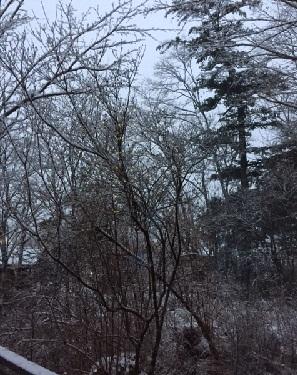 成人式雪.jpg