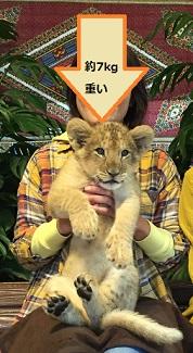 赤ちゃんライオン.jpg