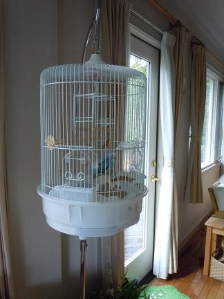 鳥かご1.jpg