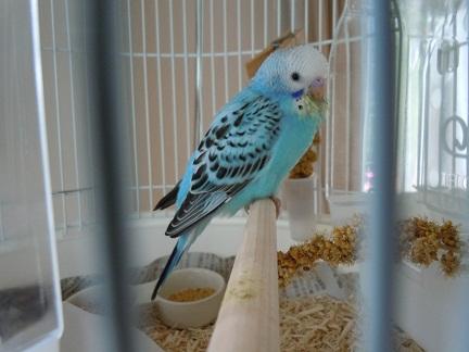 鳥かご2.jpg